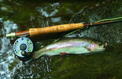 Fish Camp Prong Rainbow Trout