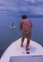 Ian Rutter jumps tarpon