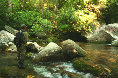 Fly fisher in the Smoky Mountains, Tennessee