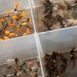 Tying Flies for Spring