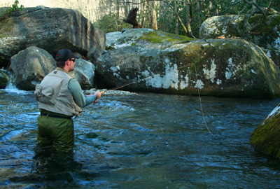 Fly fisher works a productive run of water.
