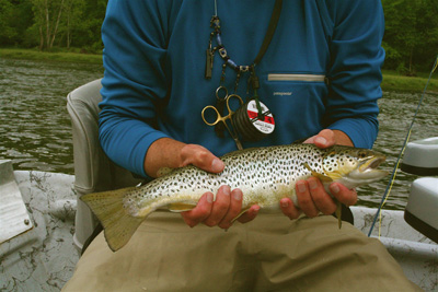 Holston River Brown Trout