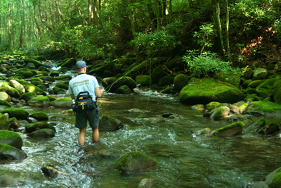 Fly fishing the Smoky Mountain back country