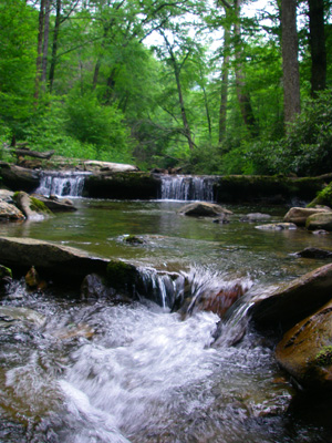 Brook trout stream, Great Smoky Mountains