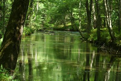 Abrams Creek Spring Creek