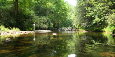 Smoky Mountain backcountry brook trout stream