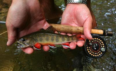 Smoky Mountain brook trout