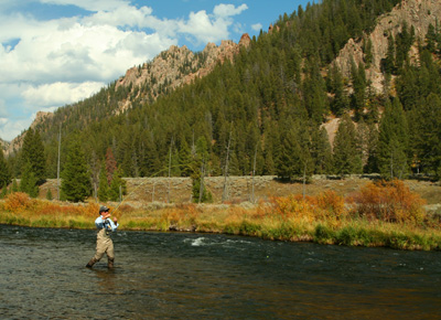 Fly Fishing with a Dropper Rig on Montana's Madison River