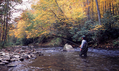 Fall fly fishing scene in the Smoky Mountains