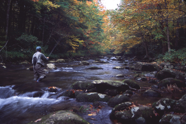 A fly fisher works his way upstream. Tellico River, Tennessee