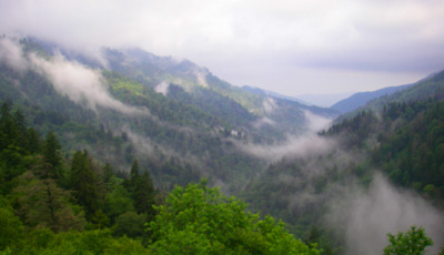 Rainy Spring Day on Newfound Gap Road