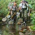 Volunteer for Great Smoky Mountains National Park Fisheries