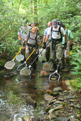 Biologists shocking a stream