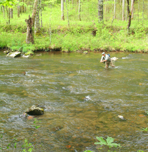 Hazel Creek is a large stream in the backcountry of the Smokies