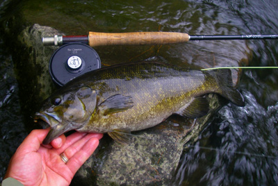 "Don't forget smallmouth bass! This is a nice 16"" bronze back from the Pigeon River."