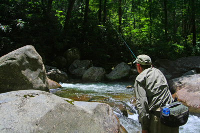 Mike Bryant casts a dry fly in a Smoky Mountain brook trout stream