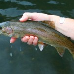 Unseasonably Cool Weather Makes for Excellent Fly Fishing Across East Tennessee and The Smoky Mountains