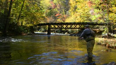 Shuler Pelham fishes Little River near Elkmont