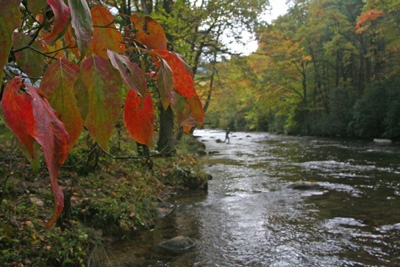 Fall colors are at their peak along the higher ridges and will only get brighter over the next week along the trout streams