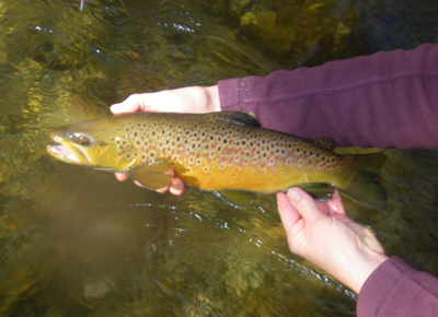 That's a nice brown anywhere, but particularly for the wild streams of the Smokies