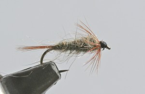February's Fly of the Month is the Pat's Nymph