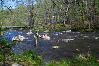 Charity fishes Hazel Creek upstream of camp