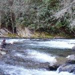 Smokies in the Grip of Intense Cold Weather; We Go Fishing