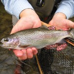 A Great Weekend of Fly Fishing on Hazel Creek