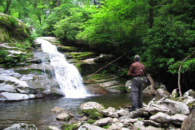 Smoky Mountain Brook Trout Stream