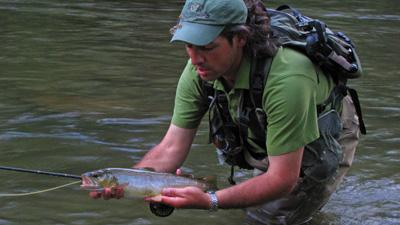Hazel Creek Brown Trout