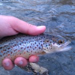 Winter Fishing in the Smokies and on the Nantahala River