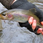 Advice from the Guides Video – Fly Fishing with Nymphs & Strike Indicators in Mountain Streams