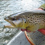 Fly Fishing with Streamers on the Clinch River