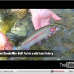 Video Fishing Report: Early April 2011