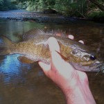 Quick Pic: Creek Smallmouth on the Popper
