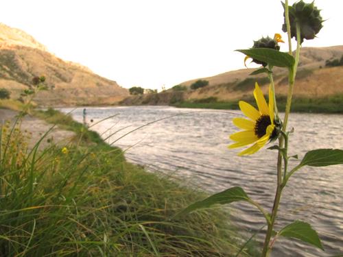Upper Bighorn River