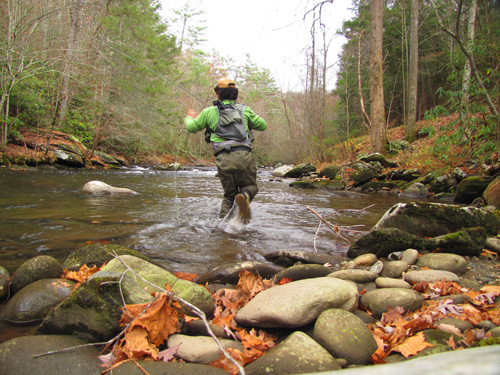Chasing a brown trout