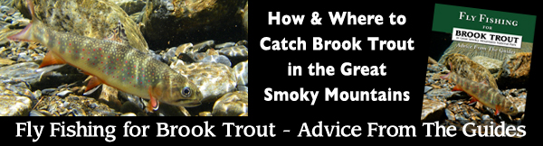 Fly Fishing for Brook Trout in Great Smoky Mountains National Park