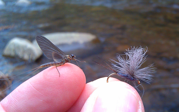 Mayfly and its imitation