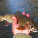 Quick Pic: Mild Weather Returns Along With the Dry Fly Fishing