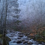 Stream and snowy trees