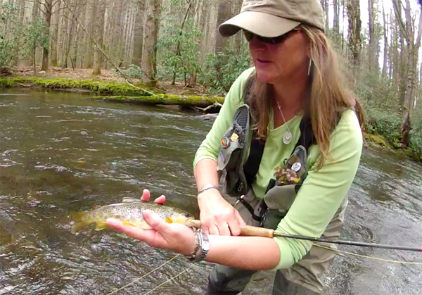 Charity Shows Cataloochee Brown Trout