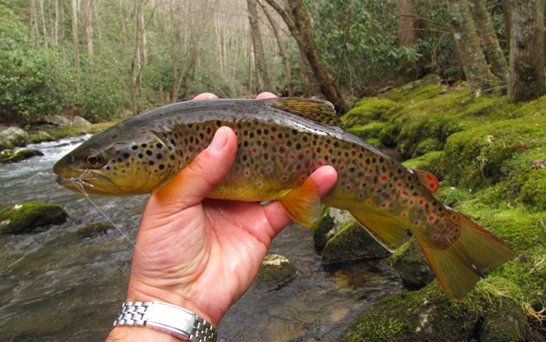 Dry flies for trout for Brown trout fly fishing