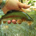 Excellent Fishing on the Tailwaters and in the Smokies