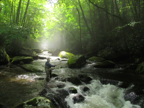 Fly fisher in misty light on Smoky Mountain trout stream