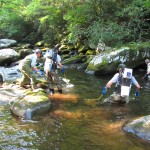 Shocking Video of Trout in the Smokies