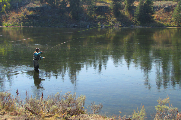 Our predictions for 2013 r and r fly fishing for Henry s fork fishing