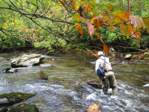 Fall Angler in the Smokies