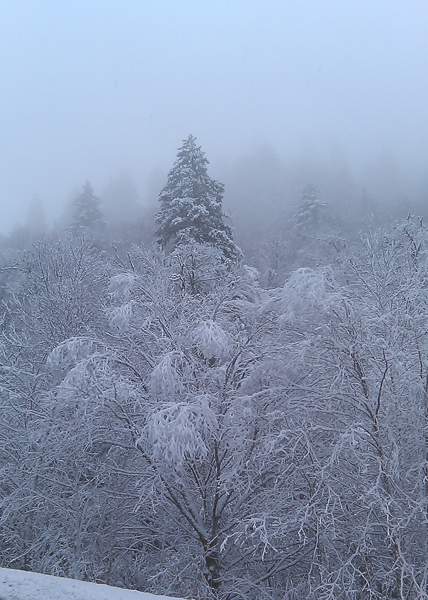 Snowy trees on Newfound Gap Road