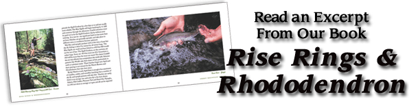 Download an excerpt of Rise Rings and Rhododendron